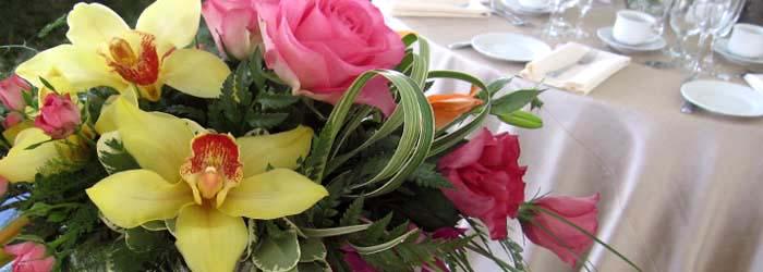 FYE_WEDSS_yelloworchids